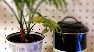 植木鉢とポット